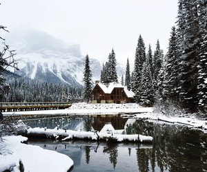 holiday, snow, and nature image