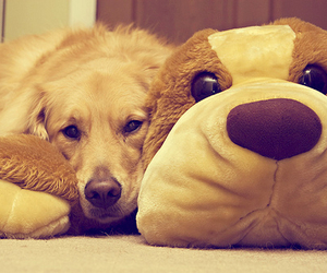adorable, dog, and toy image