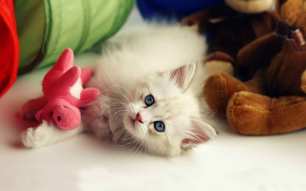 Pets Hd Wallpapers Shared By The Wallpapers On We Heart It