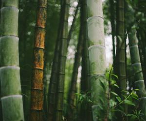 bamboo, bokeh, and china image