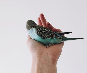 bird, blue, and hand image