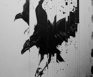 crow, black, and art image