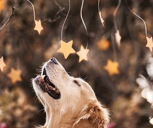 dog, stars, and animal image