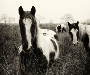 black&white, horses, and blackandwhite image