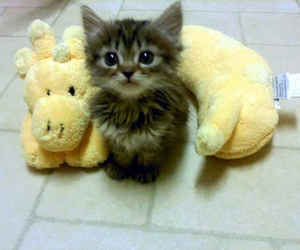 baby, cat, and kitty image