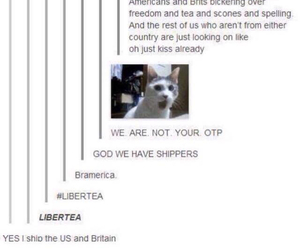 funny, tumblr, and bramerica image
