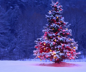 christmas, snow, and tree image