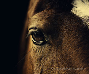 horse, photography, and print image