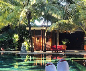 holiday, luxe, and palms image
