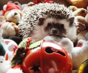 christmas, hedgehog, and navidad image