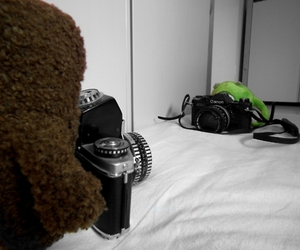 adorable, cameras, and stuffed animals image