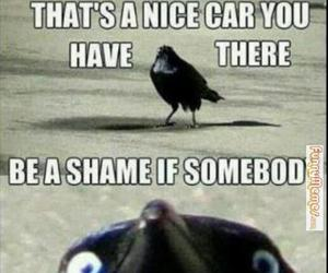 funny, bird, and car image