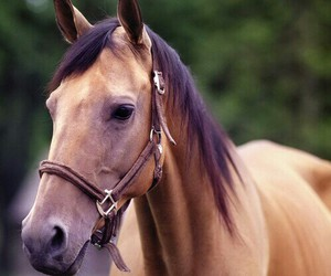 beautiful, horse, and special image