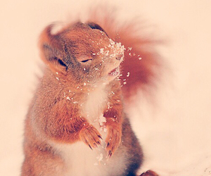 squirrel, snow, and animal image