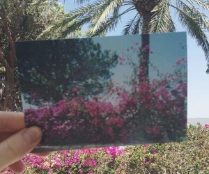 flowers, indie, and palms image