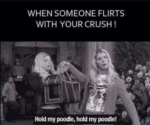 flirt, poodle, and funny image