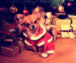 chihuahua, dog, and christmas image