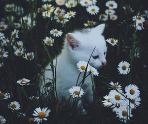 cat, forest, and vintage image