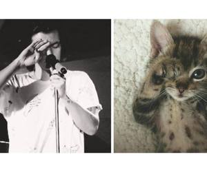 cat, direction, and one image