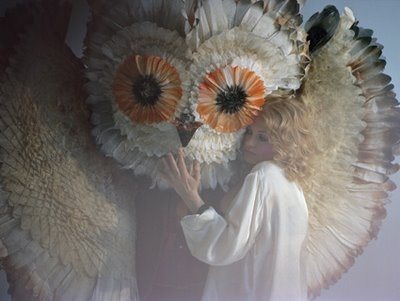 Goldfrapp and owl image