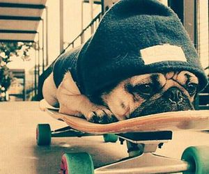 dog, skate, and cute image