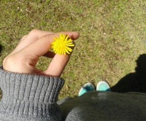 flower, infinity, and yellow image