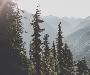 adventure, mountains, and forest image