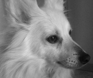 animal, b&w, and black and white image