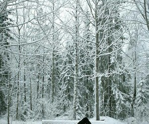 nature, snowy, and trees image