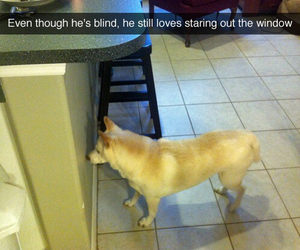 blind, dog, and funny image