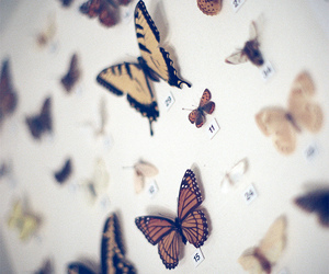 beautiful, butterflys, and couples image