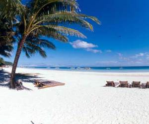 beach, nature, and palm trees image