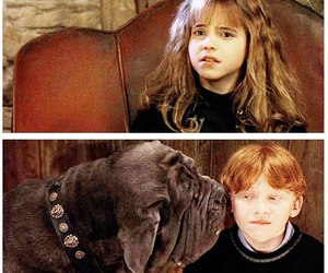 harry potter, ron weasley, and hermiona grenger image