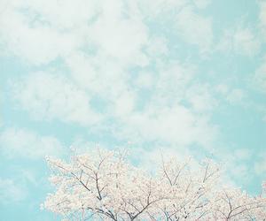 sky, flowers, and tree image