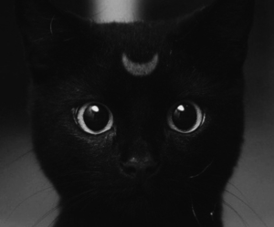 black, cat, and ♥ image