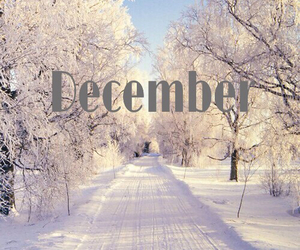 beautiful, christmas, and december image