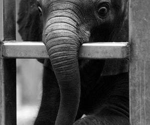animal, black and white, and elephant image