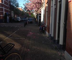 Utrecht, lombok, and bloesem image