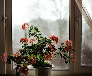 flowers, rain, and photography image
