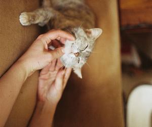 animal, kitten, and vintage image