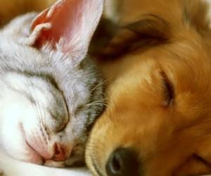 dog, animals, and cat image