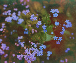 blue, flowers, and girly image