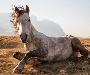 animal, beautiful, and cheval image