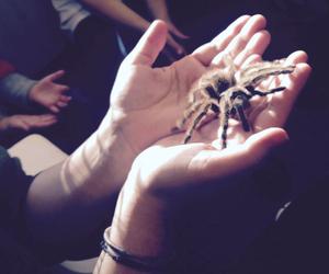 animal, animals, and arachnid image