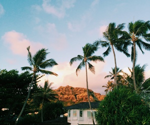 house, palm trees, and sun image