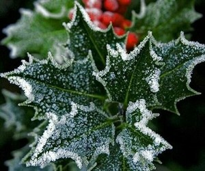christmas, winter, and holly image