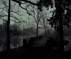 trees and dark image