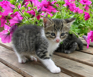 beauty, kitten, and cat image