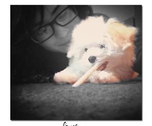 demi, dog, and demi lovato image