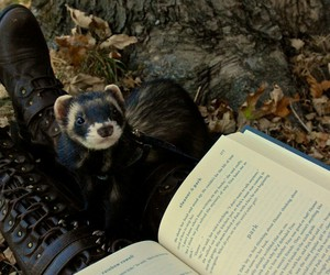 book, ferret, and winter image